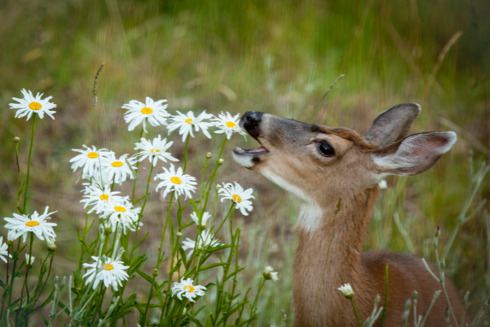 Proven Deer Resistant Plants for the Lowcountry
