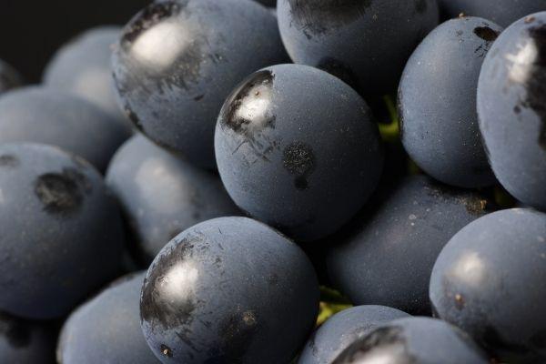grape juice turns into wine