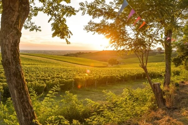Bordeaux wine is a perfect merging of gravelly soil