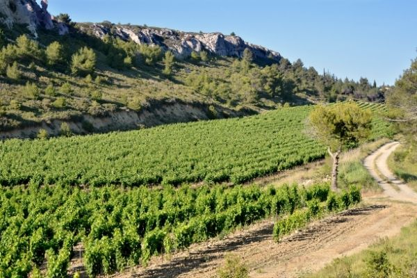 Wines from Languedoc will come from a variety of geographical classifications